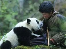 泰山天颐湖将迎来国宝大熊猫,预计元旦面客!